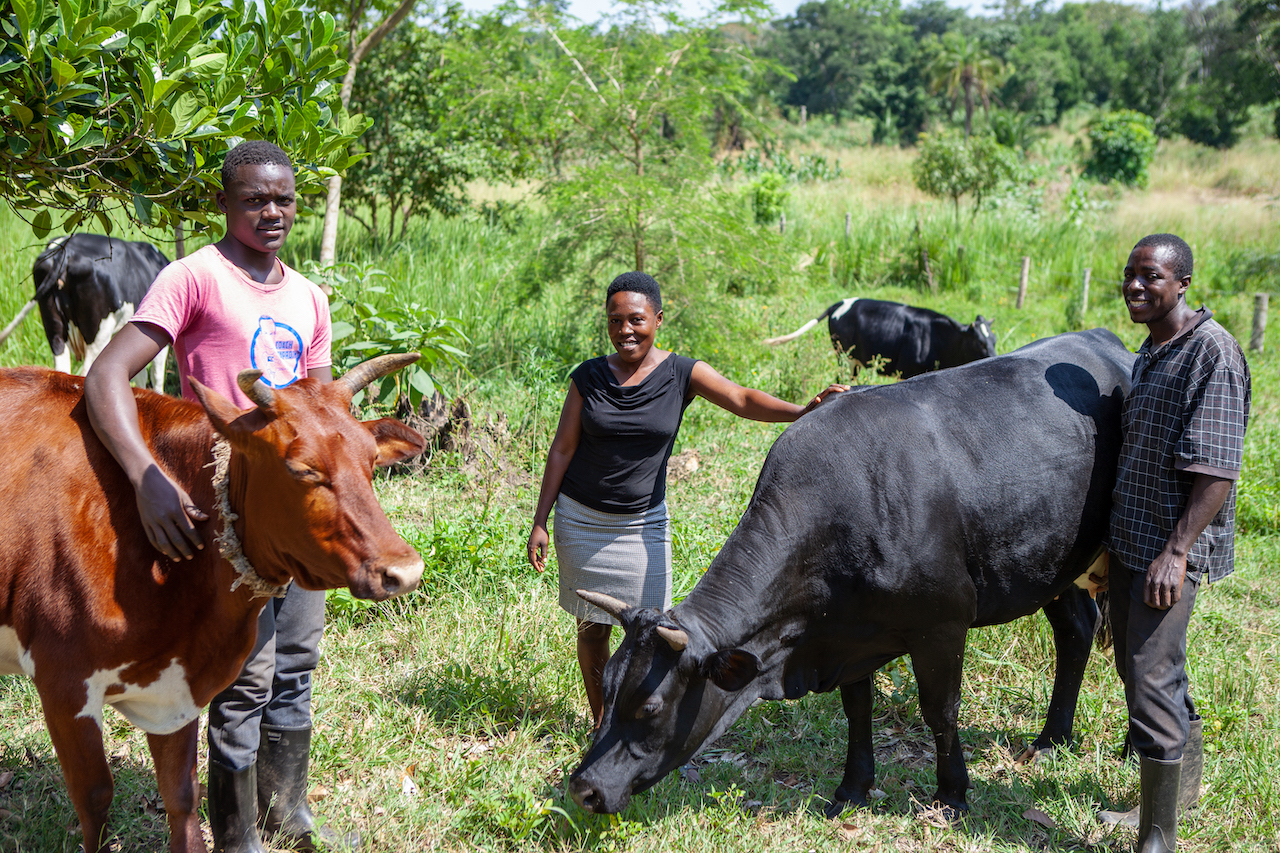 staff with cows